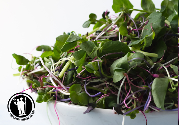microgreens for sale